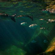Kurs nurkowy PADI Scuba Diver