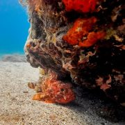 Kurs nurkowy PADI Scuba Diver_1