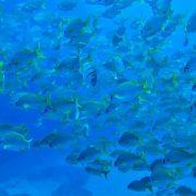 Kurs nurkowy PADI Scuba Diver_2
