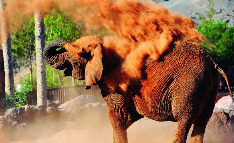 elefante Rico Canarias