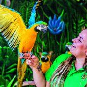 parrot Rico Canarias