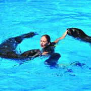 sea lion Rico Canarias