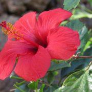 flower-1457338__340