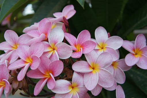 flowers-534494__340